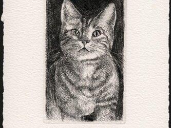 見つめる子猫 / 銅版画 (作品のみ)の画像