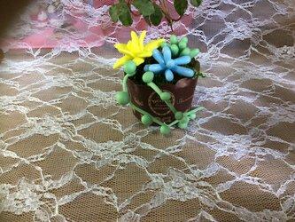 多肉植物2の画像