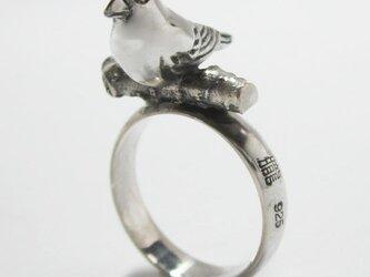 小鳥(ことり)  RINGの画像