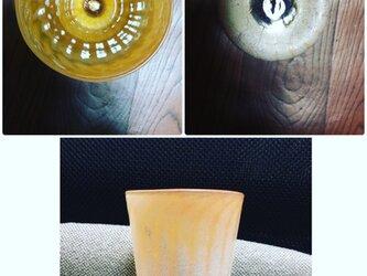 トロピカストライプグラスの画像