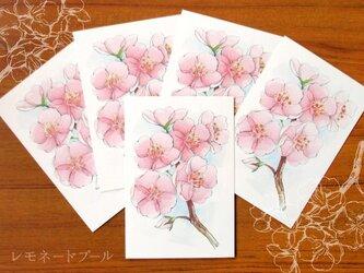桜ポストカード★5枚セットの画像