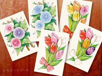 チューリップと朝顔のポストカード★5枚セットの画像