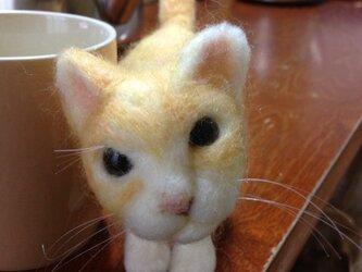 猫(みかん)の画像
