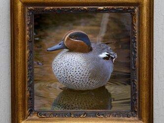 お部屋に野鳥の写真を飾りませんか?の画像