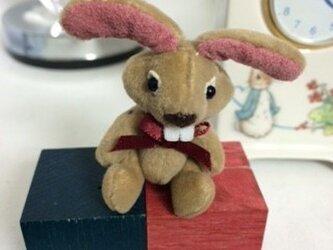 ミニチュア ウサギのリオナの画像