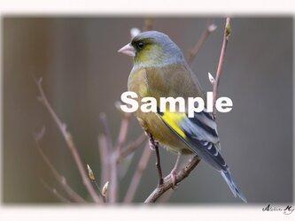 No.004  身近な野鳥たち その1 ポストカード5枚組 の画像