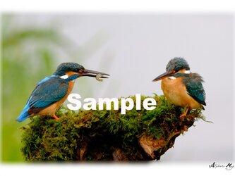 No.009  野鳥 その1 ポストカード5枚組 の画像