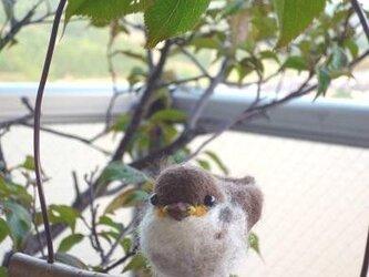 羊毛フェルト スズメのヒナほほえむの画像