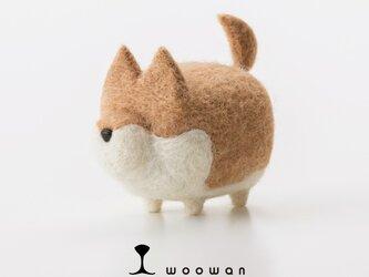 woowan【shiba】の画像