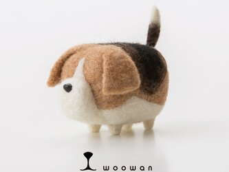 woowan【beagle】の画像