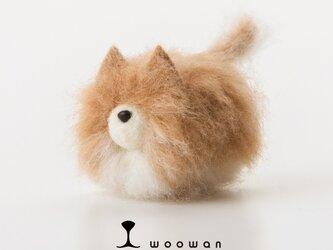 woowan【pomeranian】の画像