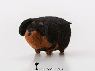 woowan【dachshund】の画像