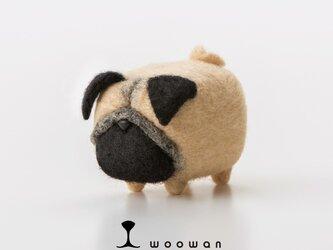 woowan【pug】の画像