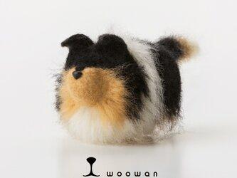 woowan【collie】の画像