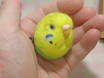 ☆選べる2タイプ☆ コロコロ♪丸顔 羊毛の小鳥  セキセイインコ ハルクイン・黄色の画像