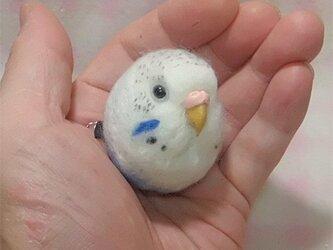 ☆選べる2タイプ☆ コロコロ♪丸顔 羊毛の小鳥  セキセイインコ ハルクイン・青色の画像
