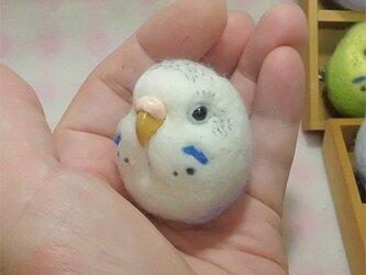 ☆選べる2タイプ☆ コロコロ♪丸顔 羊毛の小鳥  セキセイインコ ハルクイン・薄紫の画像