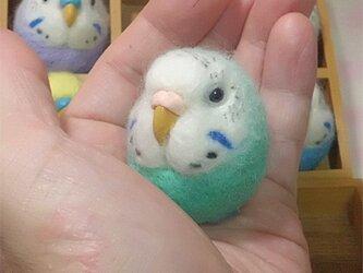 ☆選べる2タイプ☆ コロコロ♪丸顔 羊毛の小鳥  セキセイインコ オパーリン・ミントブルーの画像