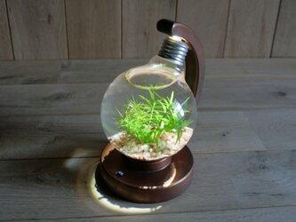 bulb terrarium ball [cool]の画像