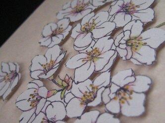 フリーメッセージカード 花さんぽシリーズ 【春紅色 染井吉野】 (1枚)の画像