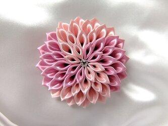 桃色渦ダリアのコサージュの画像