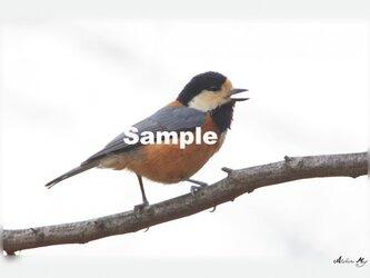 No.016 身近な野鳥たち ヤマガラ ポストカード5枚組 の画像