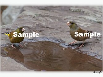 No.018 身近な野鳥たち ポストカード5枚組 の画像