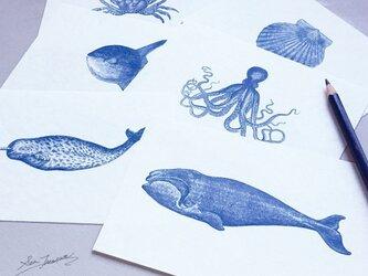 OCEANS / ポストカード セットの画像