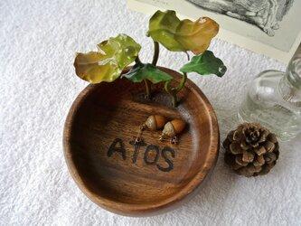 ATOSシリーズ 森の始まりプレート① 2016の画像