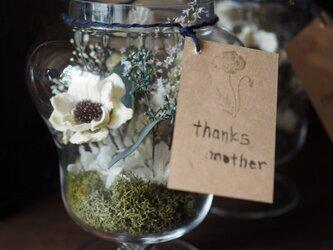 [母の日] ガラス花器のテラリウム ホワイトの画像
