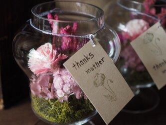 [母の日] ガラス花器のテラリウム ピンクの画像