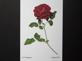 バラのポストカード ルイ14世の画像