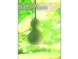 1090) 涼しげな緑のある風景 ポストカード5枚組の画像