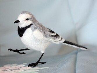 羊毛フェルト ハクセキレイ メス(冬羽)の画像