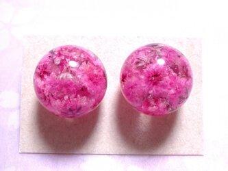 かすみ草の球体ピアス・ピンクの画像