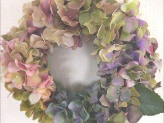 虹色紫陽花リースの画像
