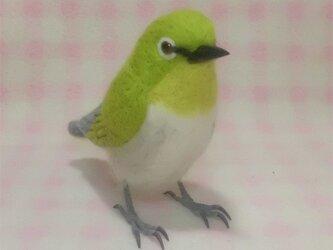 羊毛フェルト リアルサイズ♪メジロ 目白 野鳥の画像