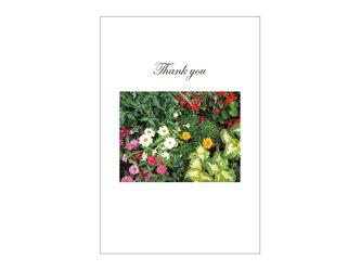 花壇の39cardの画像