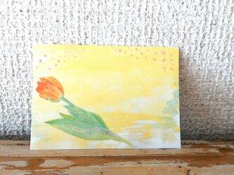 A7メモ 春のチューリップの画像