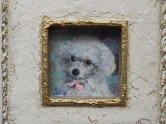 プードルの画像