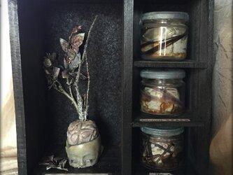 【MT様売約済み】脳の標本棚の画像