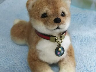 キャメル毛❤豆柴子犬(伏せ)の画像