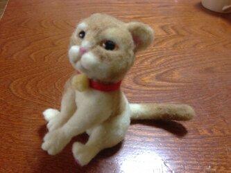 猫ですが…。の画像
