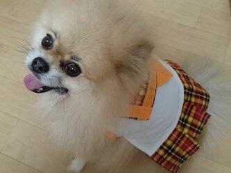 犬服セーラー服の画像