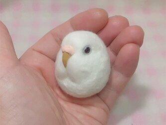 ☆選べる2タイプ☆ コロコロ♪ 羊毛の小鳥  セキセイインコ アルビノ(濃い赤目)☆選べる鼻の色の画像
