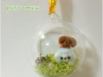 ミニチュアグラスドーム  夢見る羊とトイプードルの画像