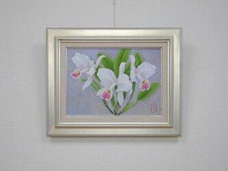 日本画 「蘭 カトレア ルデマニアーナ」の画像