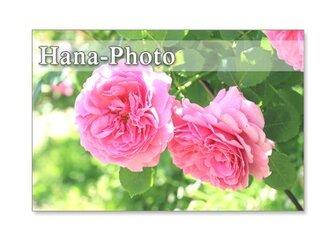 1114) バラのアップ   ポストカード5枚組 の画像