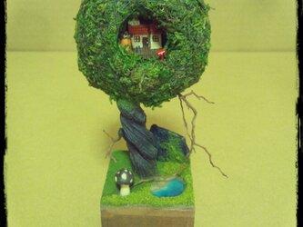 苔玉ツリーハウスの画像