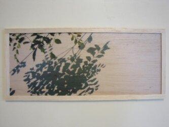 shadow of plantsの画像